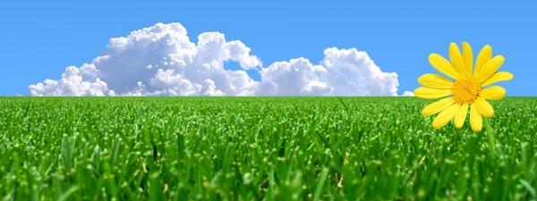Refreshing, sunny field